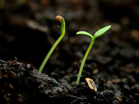 good-soil-soul